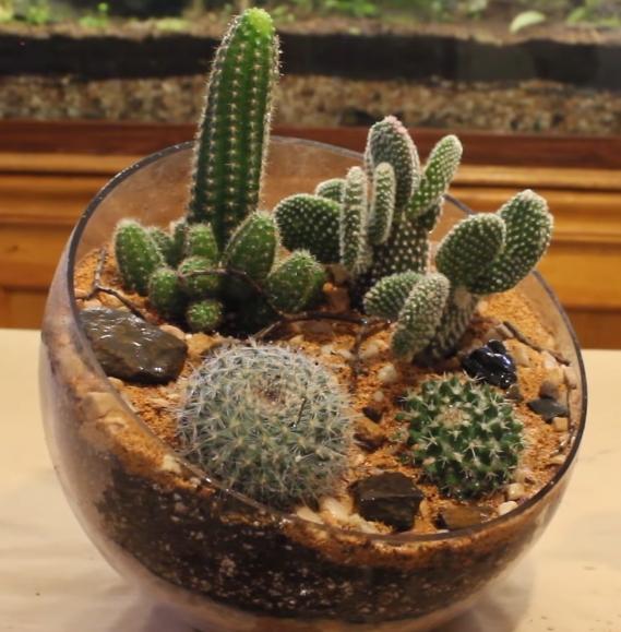 Plant Night Diy Cactus Terrarium Saratoga Paint And Sip Studio