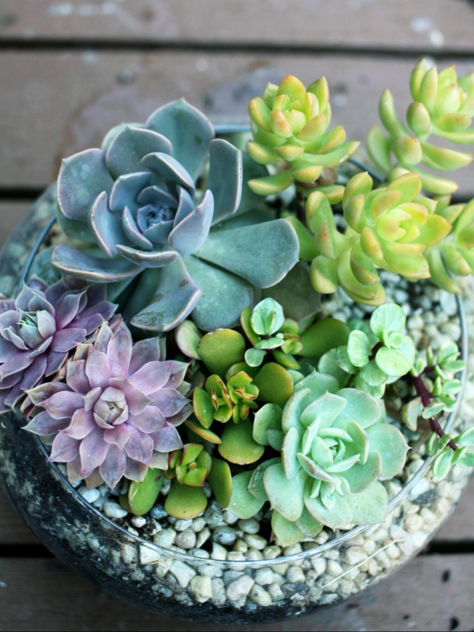 Plant Night Diy Succulent Garden Dish Saratoga Paint And Sip Studio