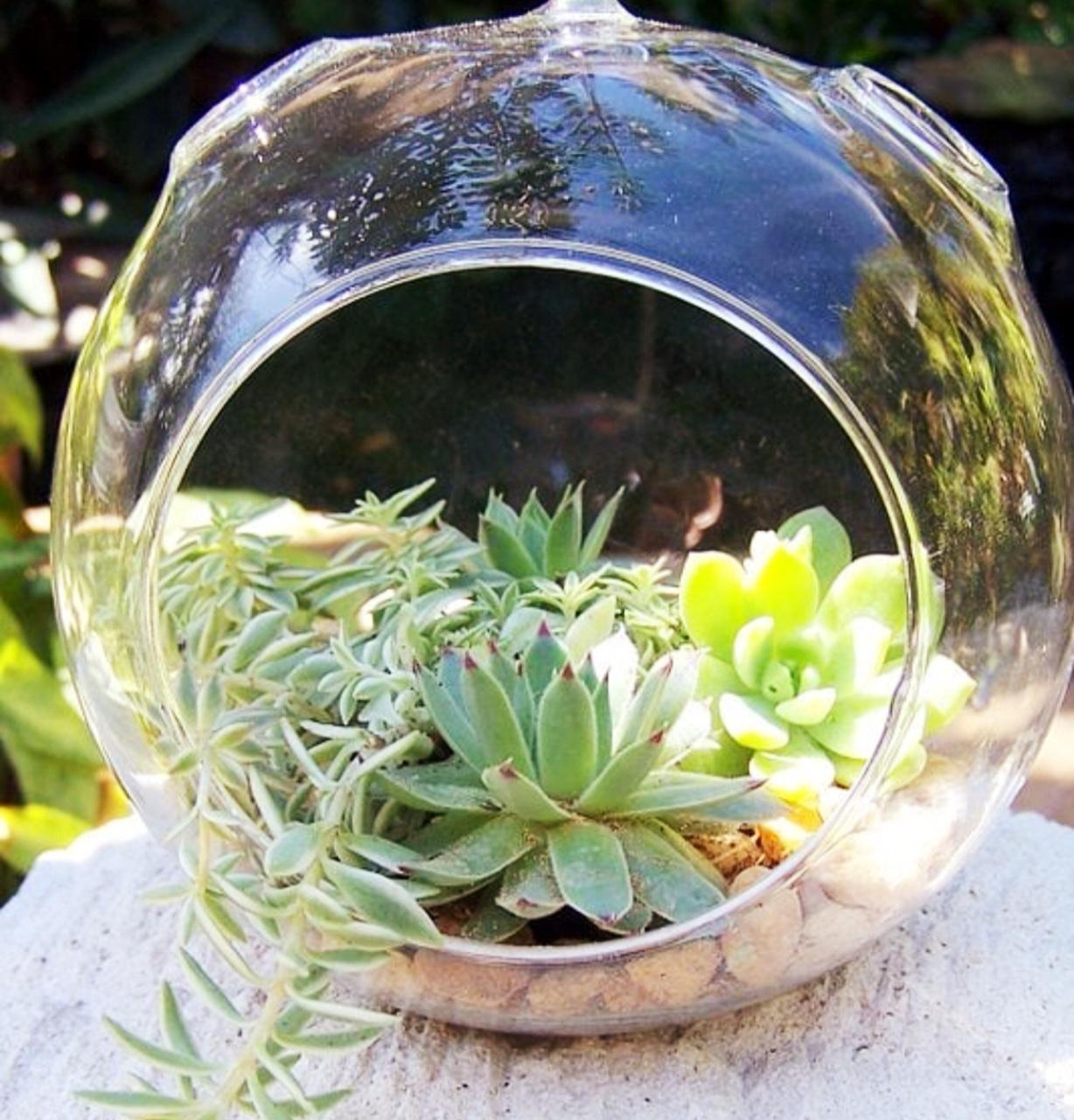 Plant Night Diy Succulent Terrarium Saratoga Paint And Sip Studio